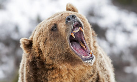 Image result for bear market