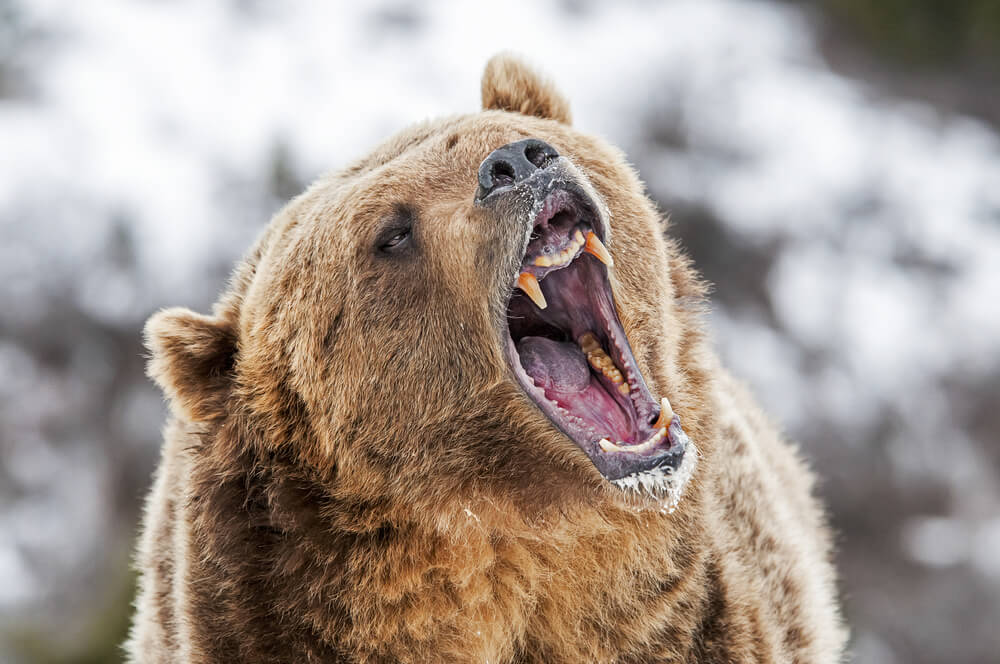 What Is a Bear Market and How Should I Invest When Stocks Sink?