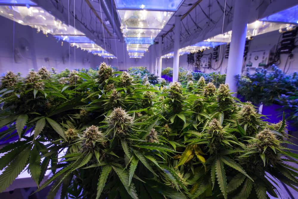 Utah Farmers, Entrepreneurs Vie for Hot Ticket to Grow Medical Pot