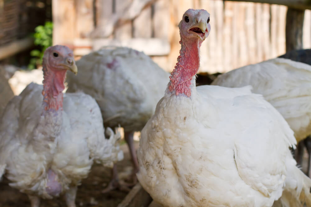 Bonner: When It Comes to the Stock Market, We're the Turkeys, Not the Farmers