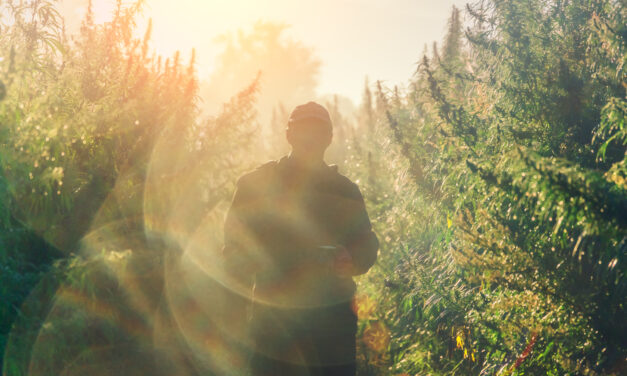 New Cannabis Watchlist Stock: Win Big Post-Election